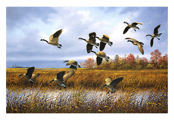 """Return to the Eastern Shore"" - Canada Geese"