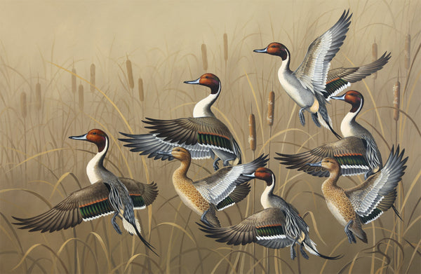 """Rising""  -  Northern Pintails - SOLD"