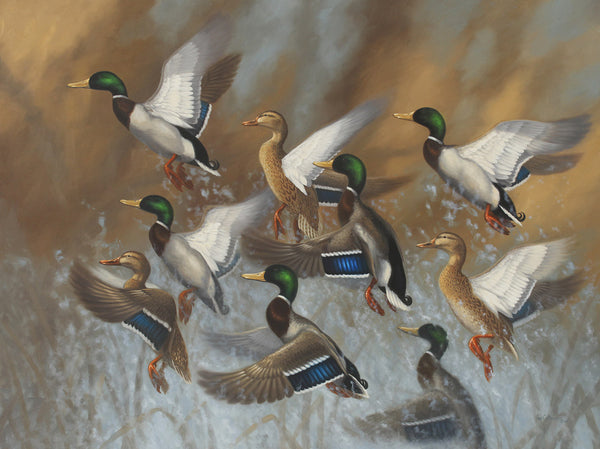 """Royal Flush"" - Mallards"
