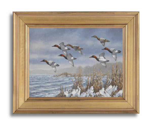 """Cold Front Canvasbacks"" - SOLD"