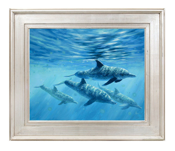 """Atlantic Spotted Dolphin"" -   SOLD"