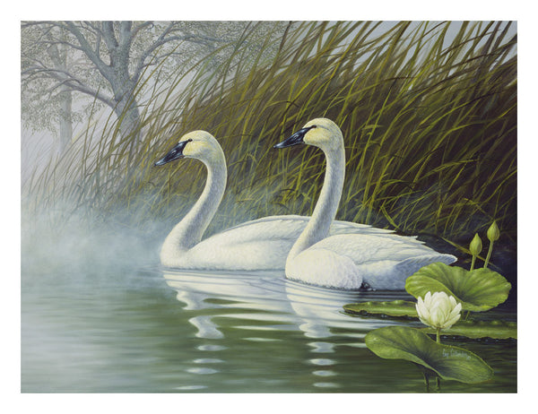 """Trumpeters in the Mist"""