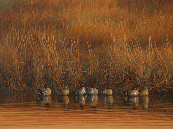 """The Good Spot"" - Greenwing Teal -  SOLD"