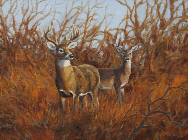 """Edge of the Thicket""  -  Whitetail Deer - SOLD"