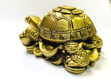 Load image into Gallery viewer, Feng Shui/Ying Yang King Tortoise for Good Luck [colour]- Hautie UK, #Nightfashion | #Underfashion
