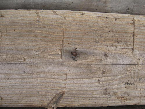 Reclaimed wormy chestnut beams