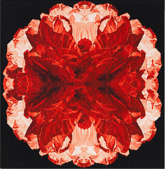 Poppy Night by Alexander McQueen
