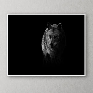 Wolf Black & White Portrait