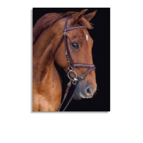 Broderie Diamants Cheval <br> Pur-Sang Anglais