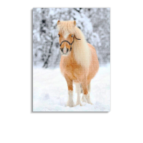 Broderie Diamants Cheval <br> Poney Shetland
