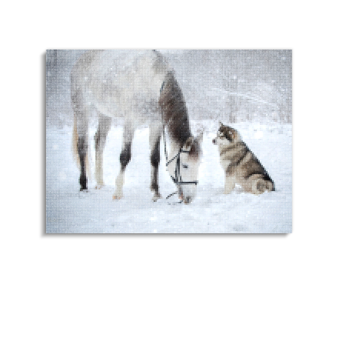 Broderie Diamants Cheval <br> Grand Blizzard