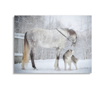 Broderie Diamants Cheval <br> Étalon des Neiges