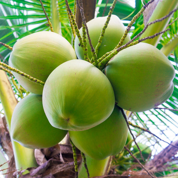 5 good reasons to drink coconut water