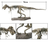 4D T-Rex Dinosaur Skeleton Model