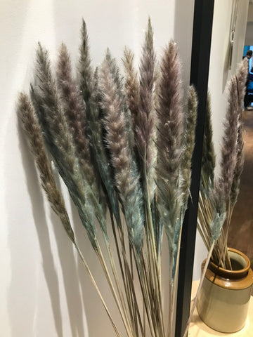 Dried Fluffy Pampas Stem - Blue 80cm