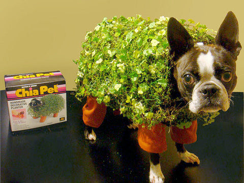 French Bulldog wearing Chia Pet Halloween costume
