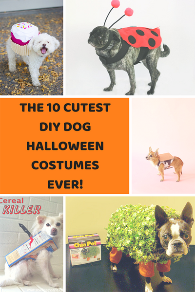 10 cutest DIY dog Halloween costumes ever