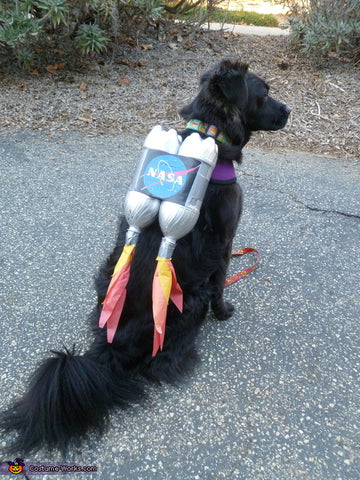 brown dog wearing rocket dog Halloween costume
