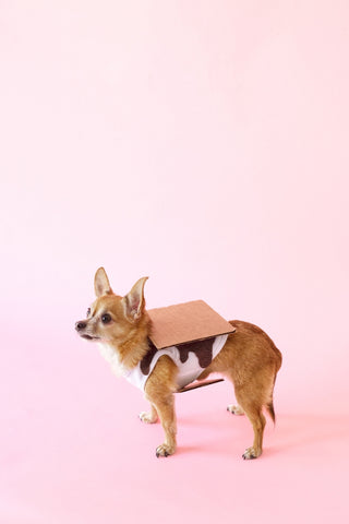 Chihuahua wearing S'mores Halloween costume