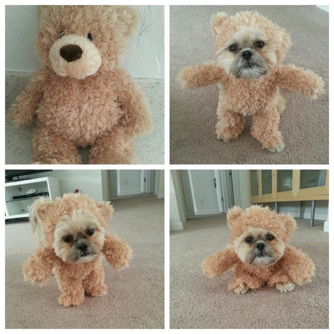 Shih Tzu wearing teddy bear Halloween costume