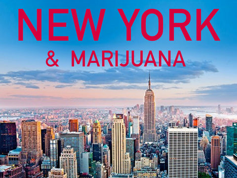 New York Attempts to Reduce Barriers to Medical Marijuana