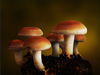 Can Psilocybin Replace Traditional Pharmaceuticals for Depression & Anxiety?