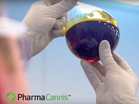 PharmaCannis: The Future of Cannabis in New York