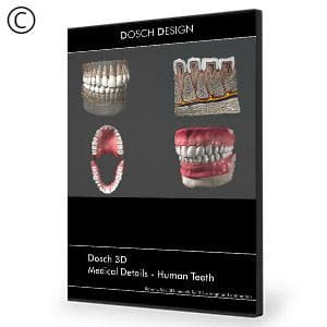 DOSCH 3D: Medical Details - Human Teeth-Dosch Design-NOVEDGE