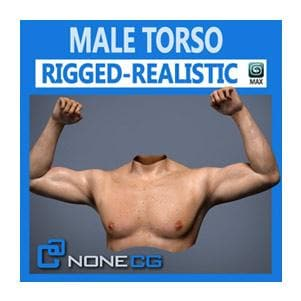 Characters - Adult Male Torso Rigged-NoneCG-NOVEDGE