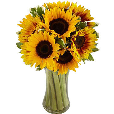 Endless Summer Sunflower Arrangement in a Vase