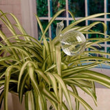 Self-Watering Plant Glass Bulbs - Engineracing