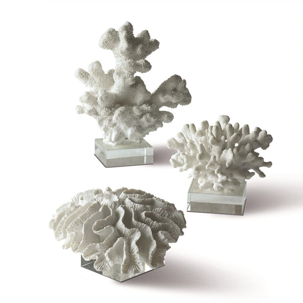 Set of 3 White Coral Sculpture on Glass Stands