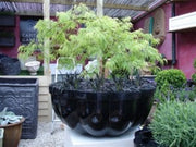 Citadel Planter design by Capital Garden Products