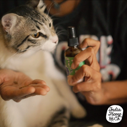 Hemp seed Oil (HOP) - Cats - India Hemp and Co.