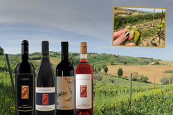 Serra San Martino - meet the winery!