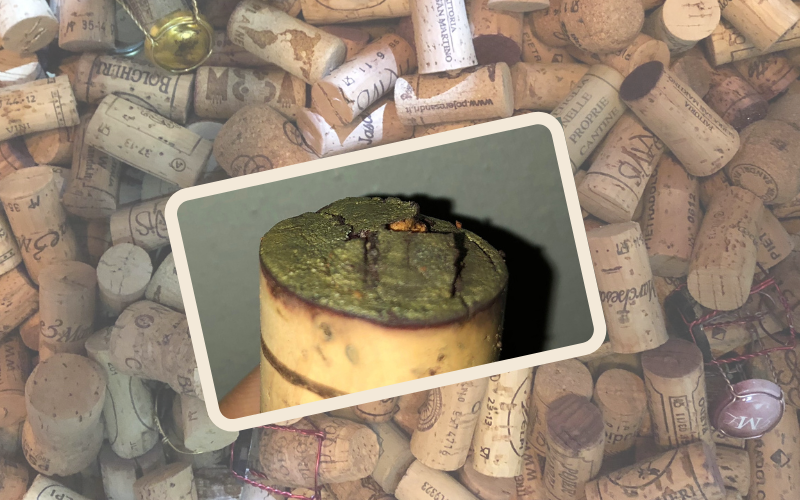 Quercetin loves Cork!