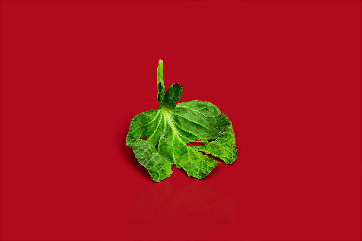A vegetable cabbage leaf on a red background