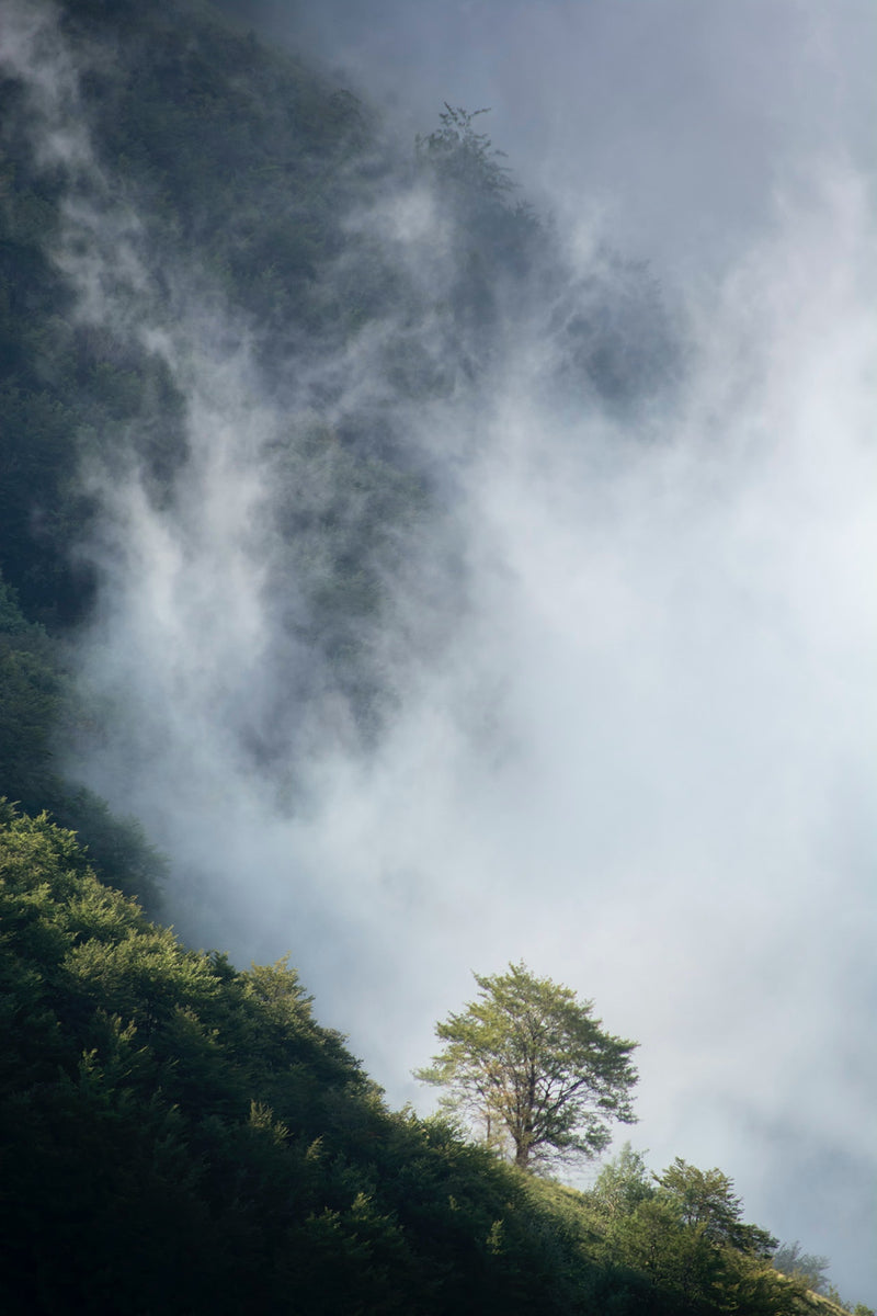 A tree in nature, with a dark cloud of smoke coming closer from the left