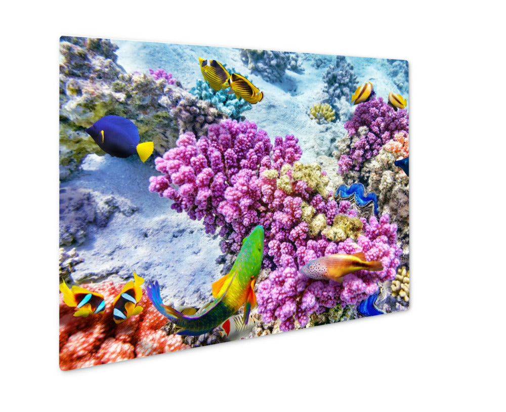 Underwater World With Corals And Tropical Fish - Metal Panel Wall Art