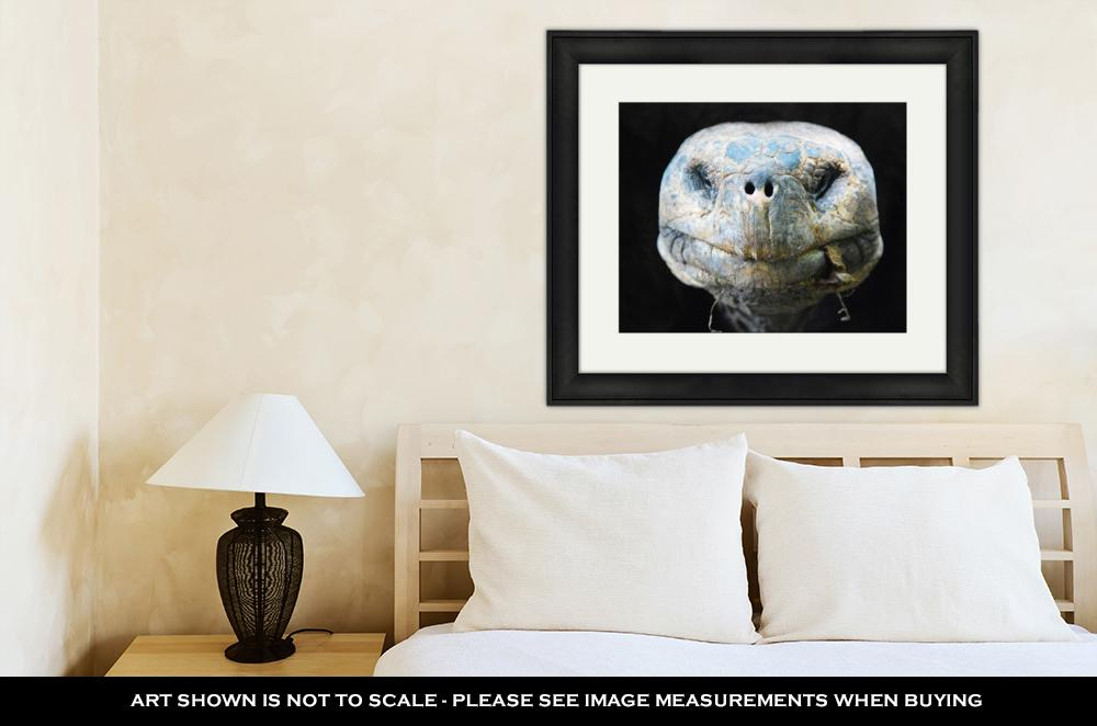 Lonesome George - Framed Wall Art