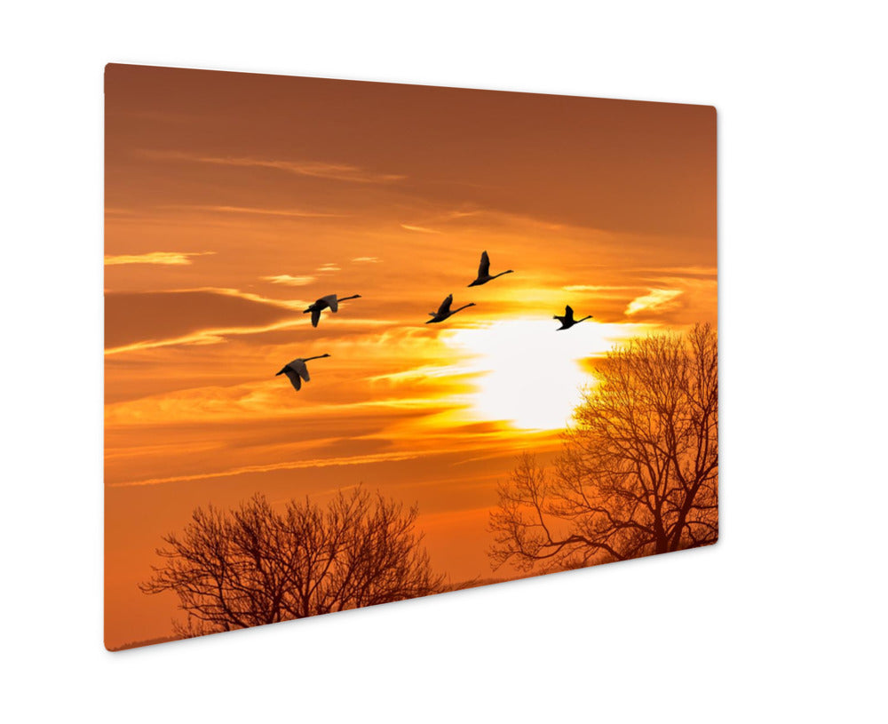 Sandhill Crane on a Migration - Metal Panel Wall Art