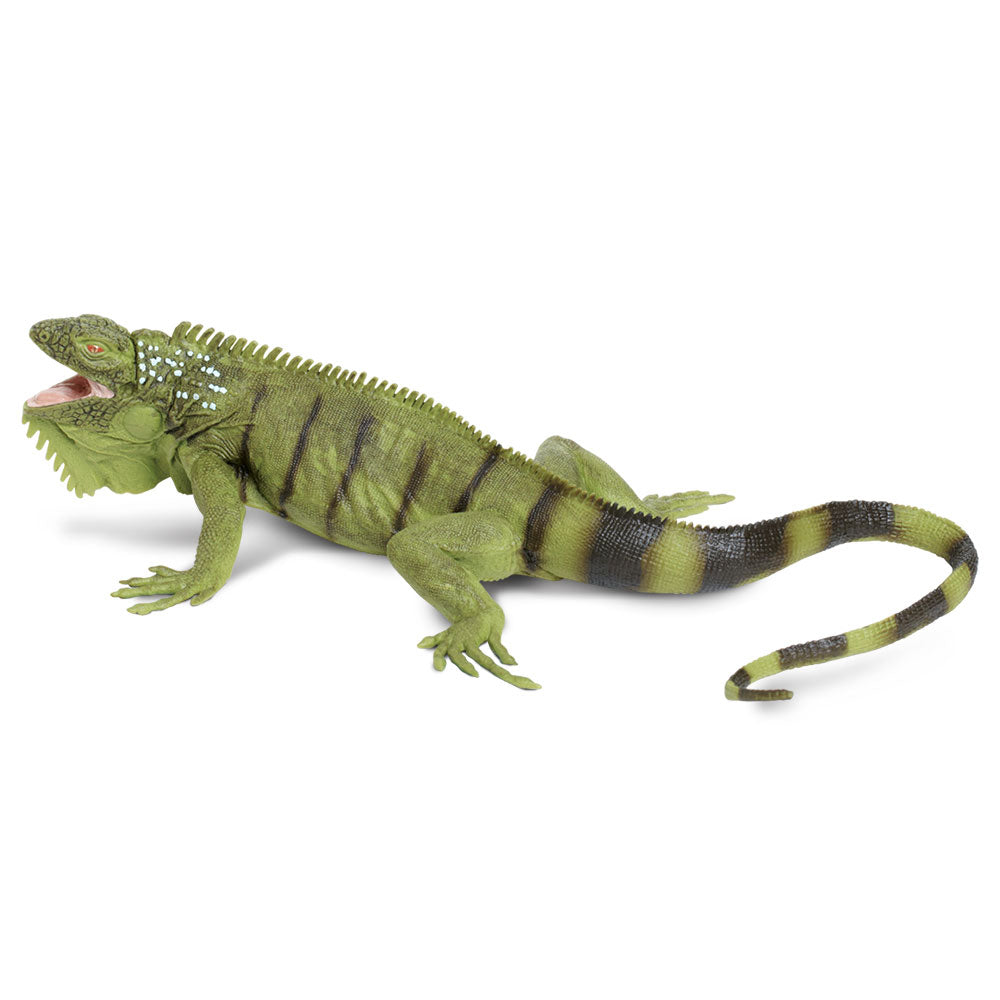 Safari Ltd Iguana