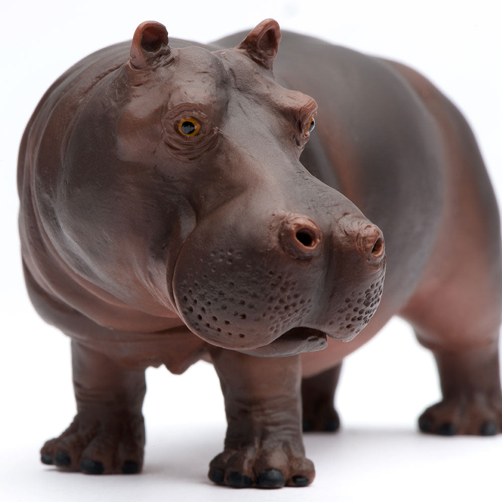 Hippopotamus by Safari Ltd