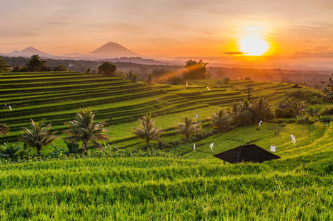 Fields of Ubud Collection