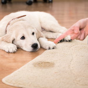 How to avoid dog toileting accidents in the house