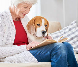 Retired lady with beagle dog