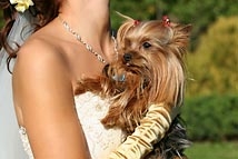 Tips for including pets at your wedding