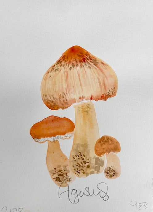 Agaricus | Julianna Byrne | Original Artwork | Gouache and Ink | Partnership Editions