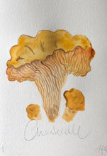 Load image into Gallery viewer, Chanterelle