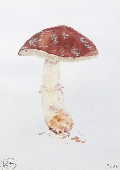 Fungi Agaric II | Julianna Byrne | Original Artwork